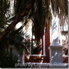 house under palm leaves